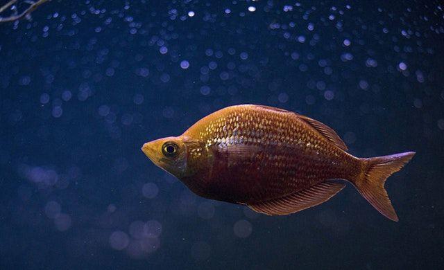 Pescado Azul | SALUD Y BENEFICIOS para tu cuerpo.